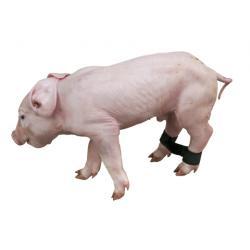 Balze anti-divaricamento per maialini