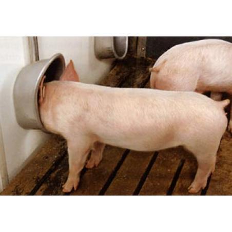 Abbeveratoio per maiali misura grande
