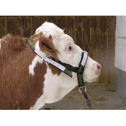 Reinforced halter for calves and young bulls