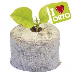 Pastiglie di fibra di cocco per semi (conf. 12 pezzi)