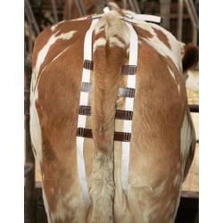 Prolapse bandage for cattle
