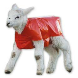 Blanket for lambs against hypothermia