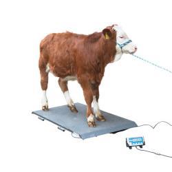 Balanza para ganado diferentes tamaños