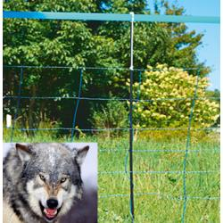 Electrified network against wolves and foxes