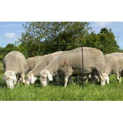 Green OviNet net for goats and sheep