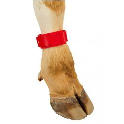 Plastic foot strap for cattle