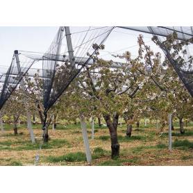 Rete antigrandine per piante da frutto